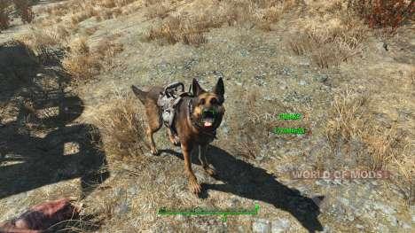 Trucos de armadura para los perros para Fallout 4